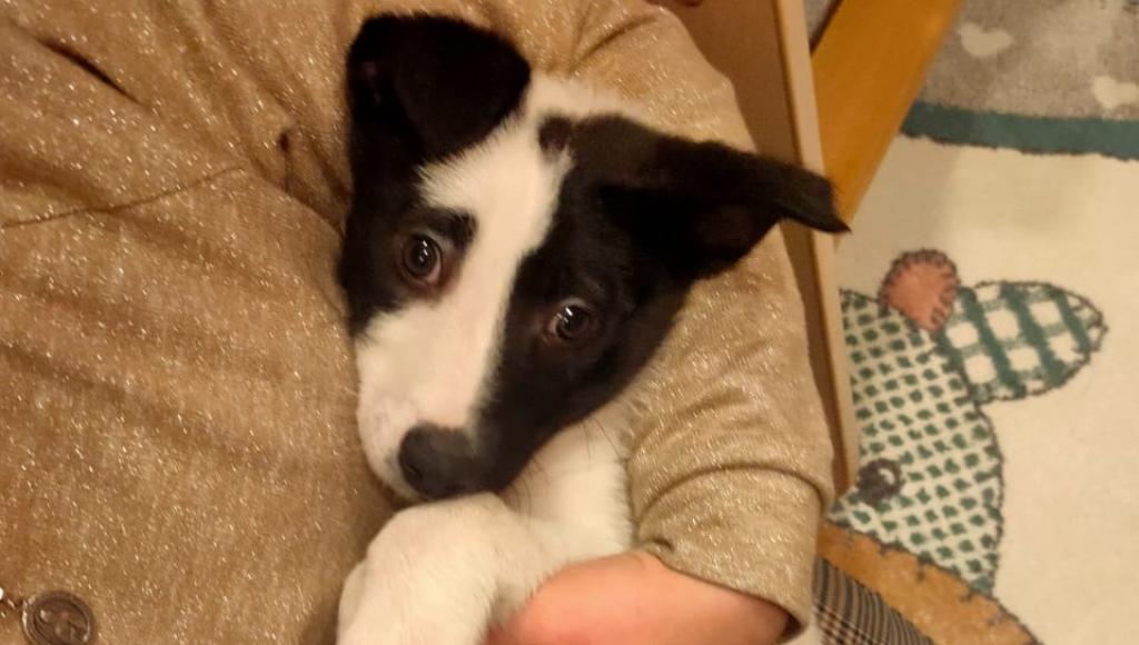 В Твери щенок, спасенный из колодца с ледяной водой, нашел новый дом - новости Афанасий
