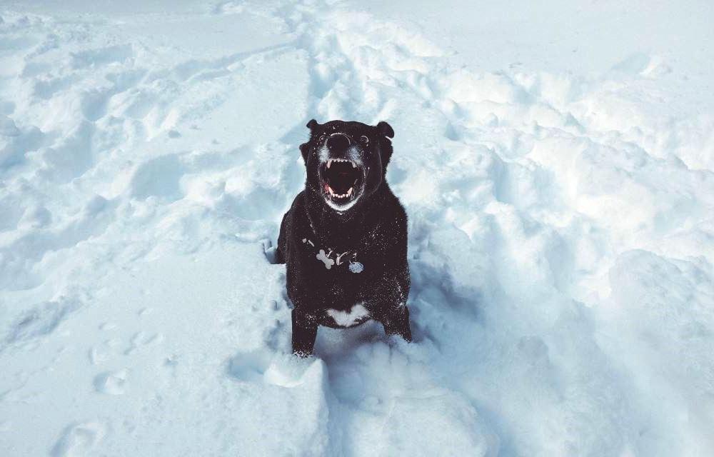 В Тверской области собака снова напала на человека - новости Афанасий