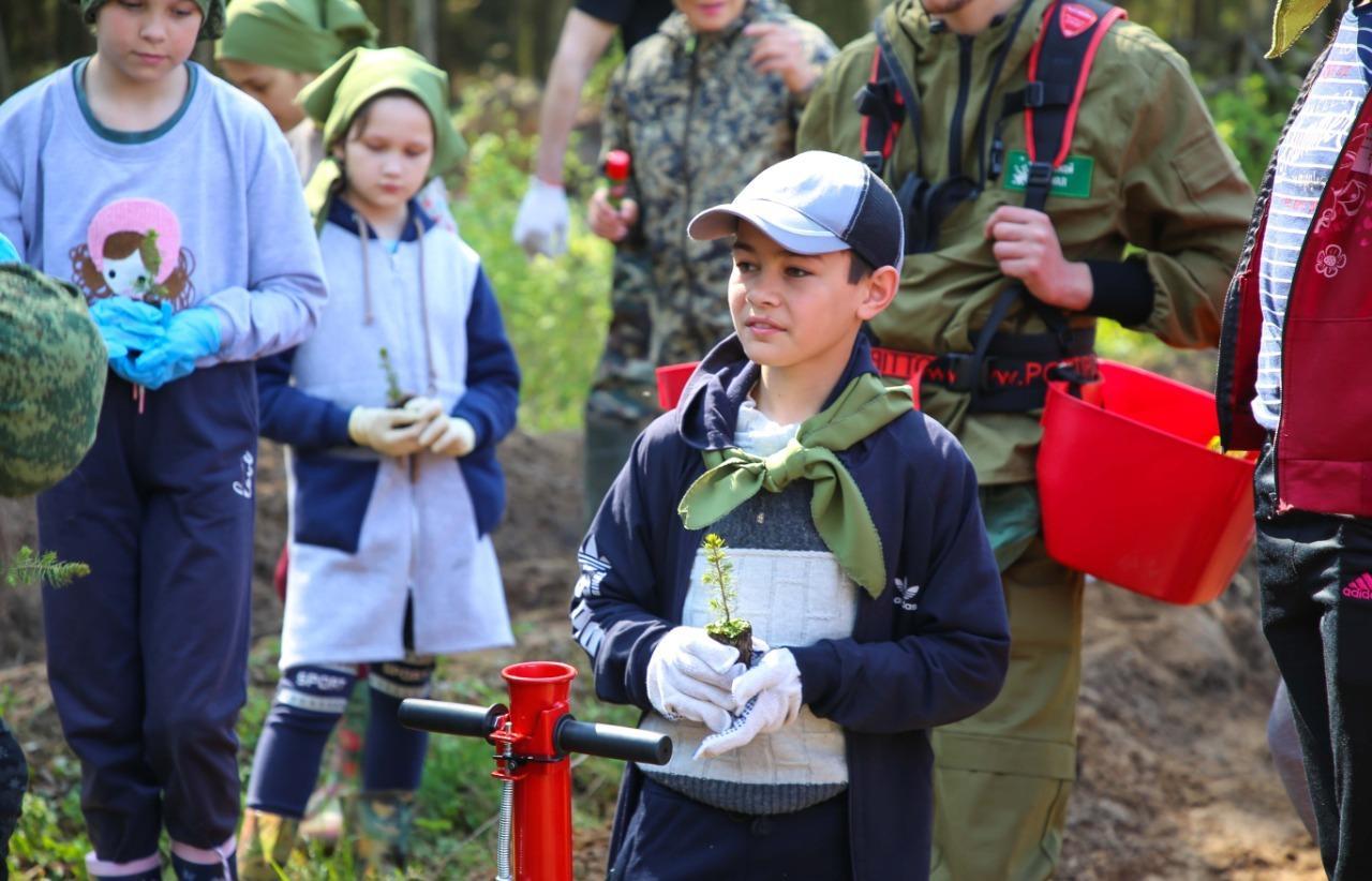 Более 2 тысяч елей вырастут в Тверской области после Всероссийского дня посадки леса - новости Афанасий