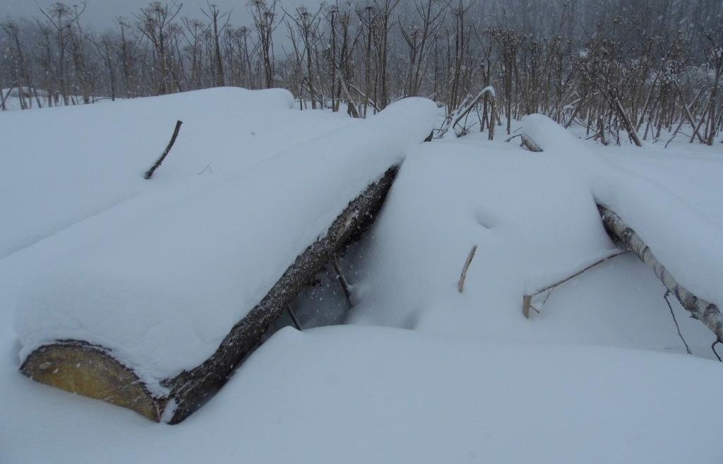 Хозяин сельхозугодий в Тверской области завалил их отходами деревообработки - новости Афанасий
