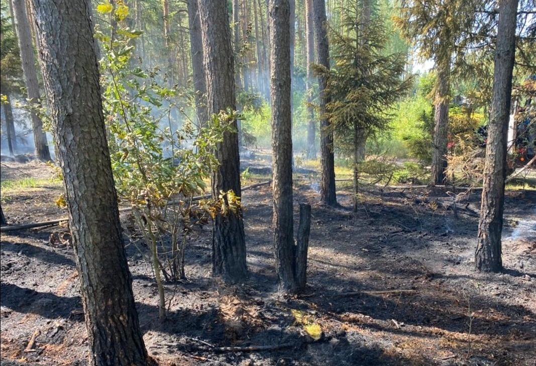 Лесной пожар тушат под Тверью