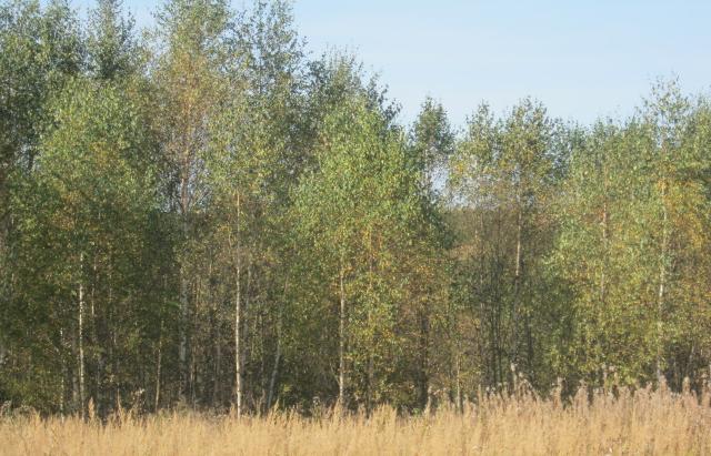 В Торжокском районе выявлено свыше 70 гектаров неиспользуемых сельскохозяйственных угодий - новости Афанасий