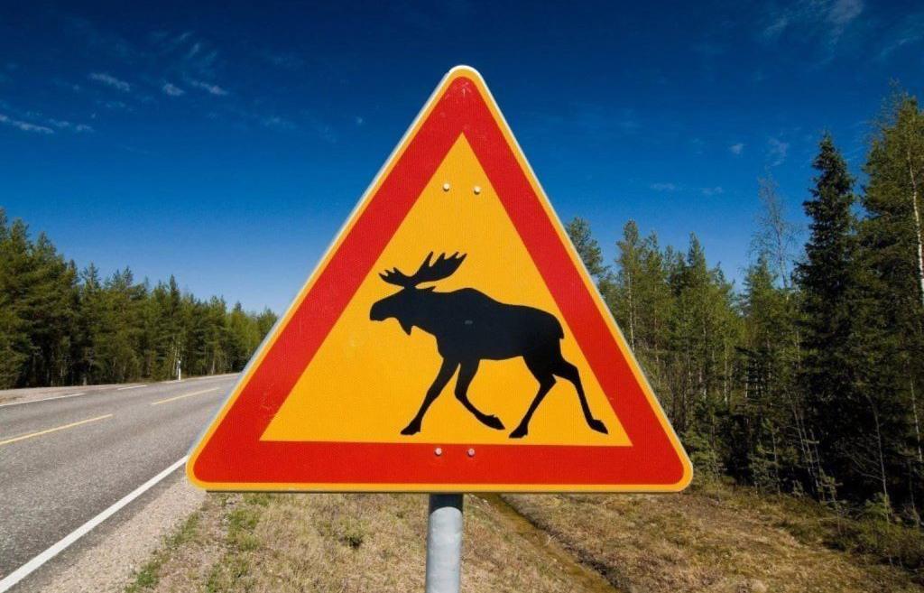 В Тверской области в 2020 году причиной 93-х ДТП стали дикие животные - новости Афанасий