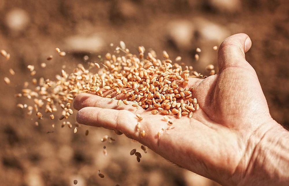 Россельхознадзор досмотрел более двух тонн семян, ввезенных на территорию Тверской области - новости Афанасий