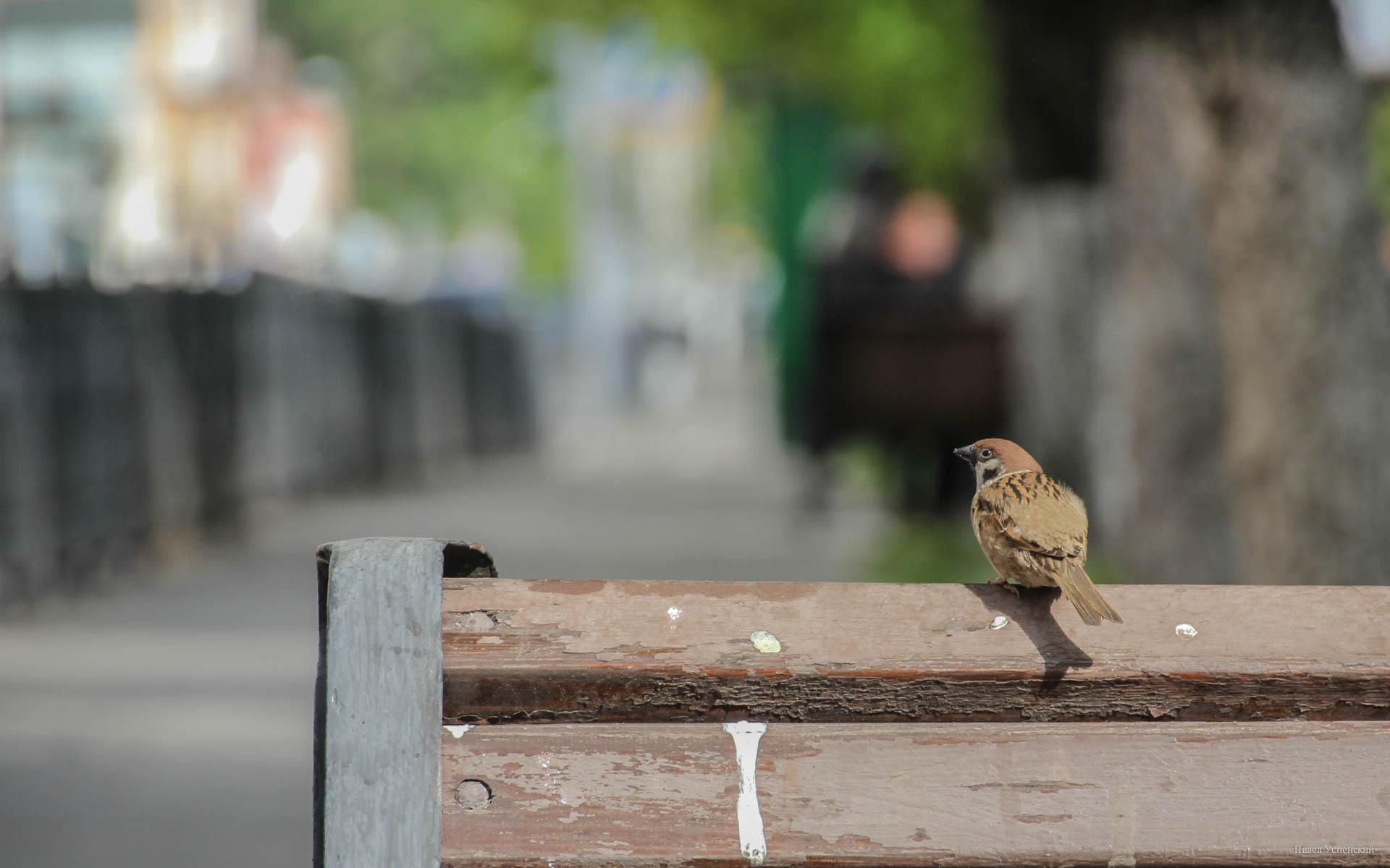 В субботу в Тверской области ожидается жара