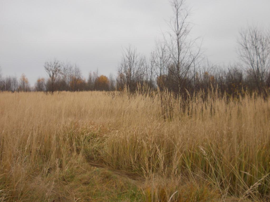 Собственнику земель сельхозназначения назначен крупный штраф за нарушение земельного законодательства - новости Афанасий