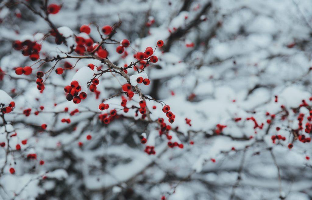 Погода в Тверской области: ветер усилится и принесет с собой похолодание