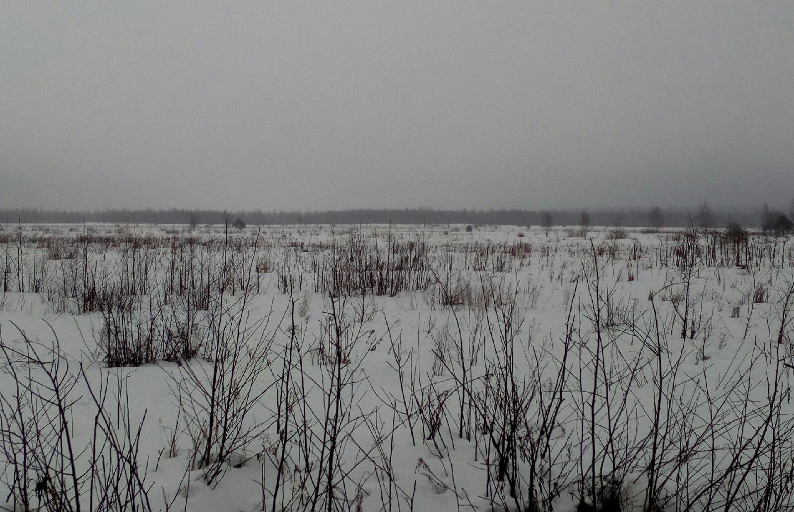 В Кимрском районе продолжают зарастать свыше 6 гектаров сельхозугодий - новости Афанасий