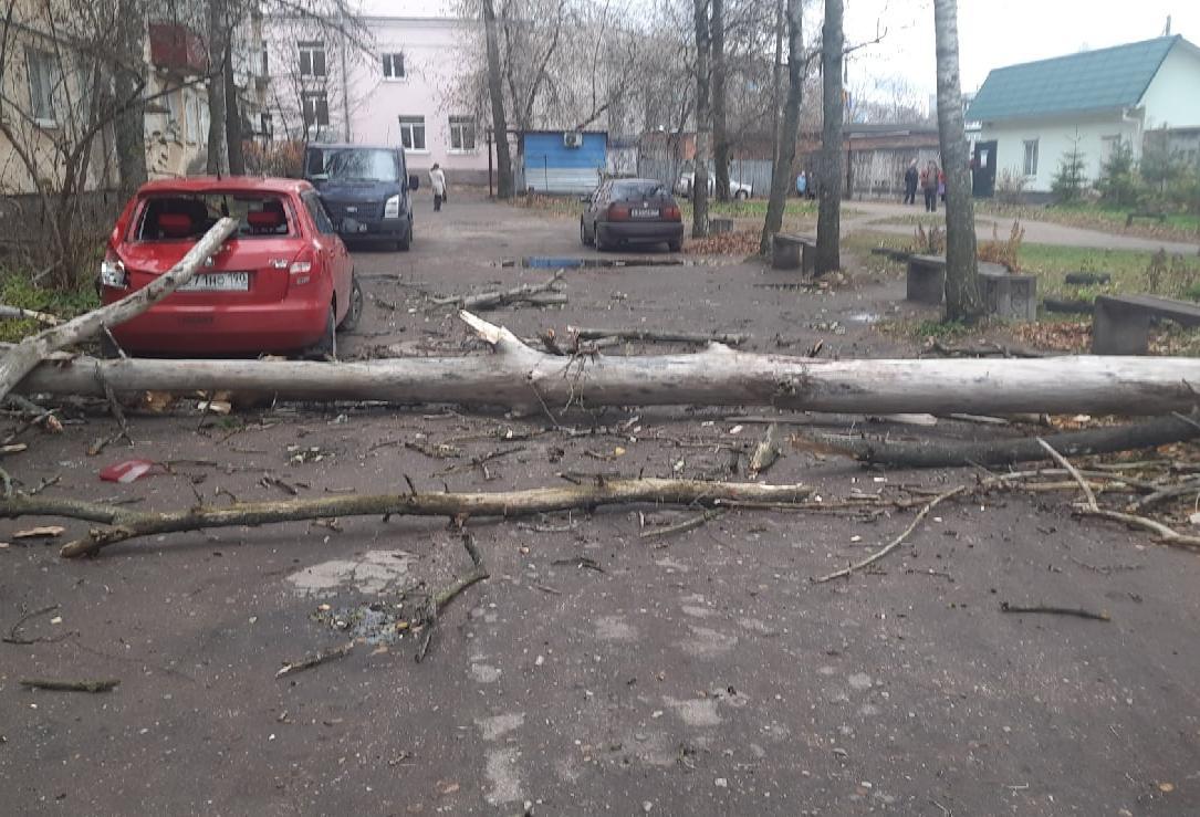В Тверской области сильный ветер валит деревья во дворах и возле дорог - новости Афанасий