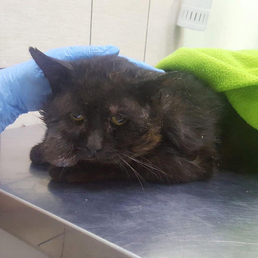 В Тверской области просят помощи для «тяжелых» котов