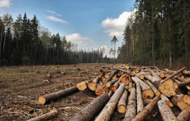 В Тверской области будут судить ленивого лесничего - новости Афанасий