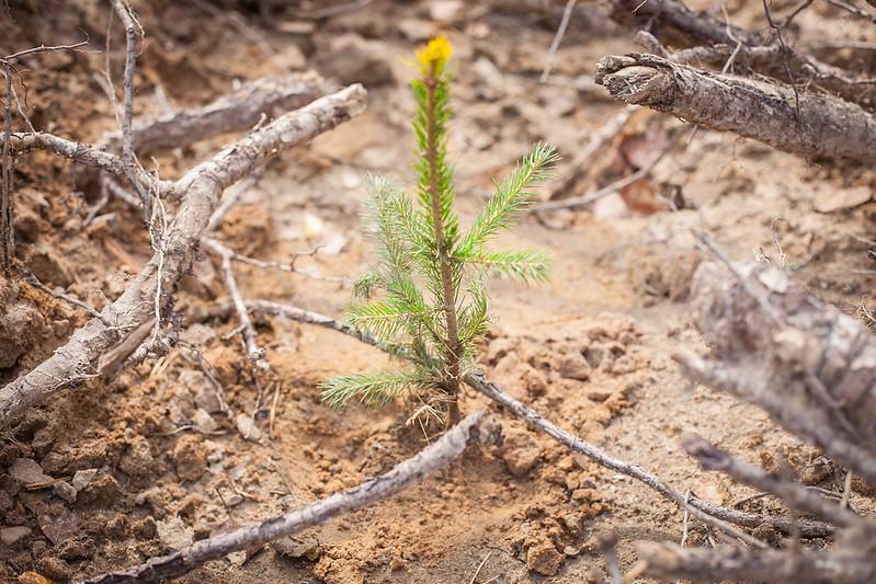 Жителей Тверской области приглашают посадить лес и выиграть деньги