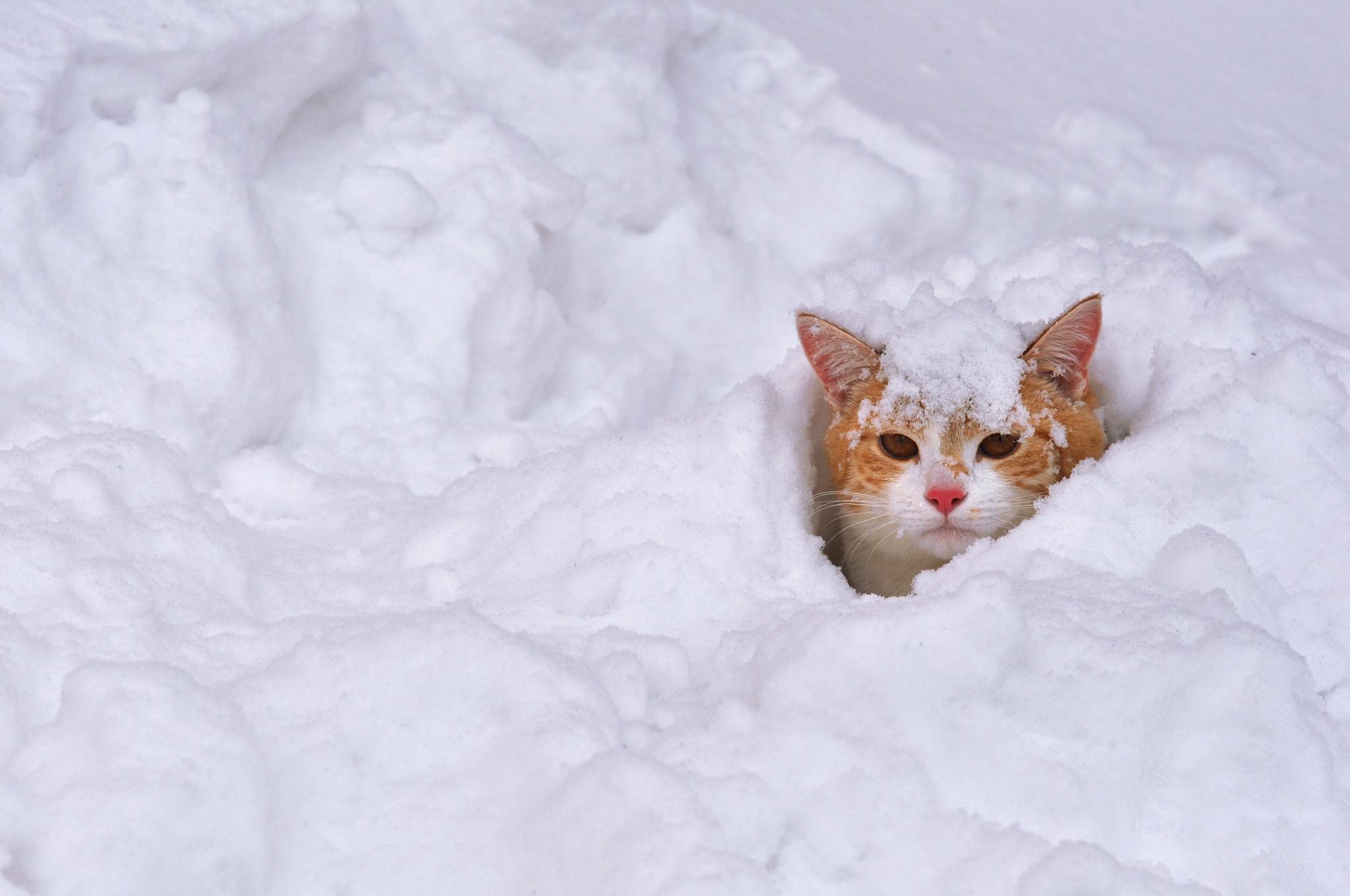 В Тверской области ожидается снегопад