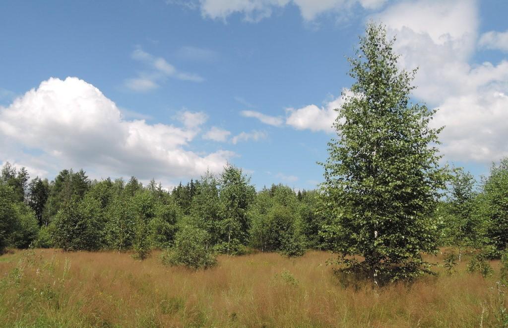 Почти 3 гектара в Конаковском районе Тверской области заросли кустарниками - новости Афанасий