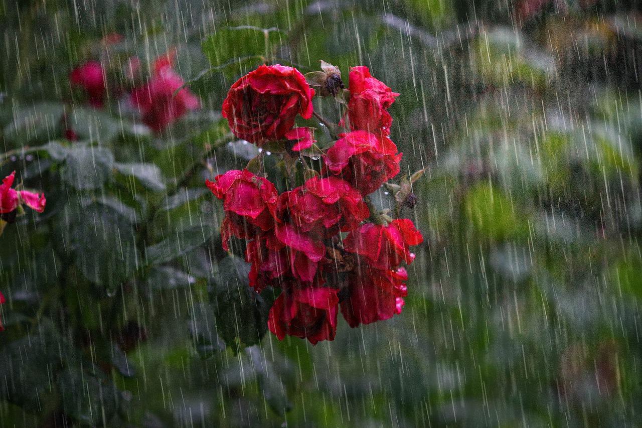 Сильный дождь в Тверской области ожидается в понедельник