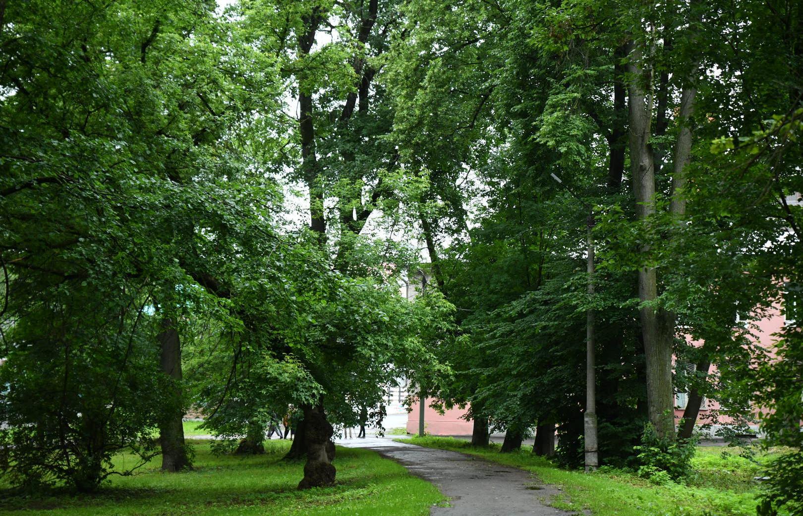 Студенты Политеха придумали, что делать с парком «Воксал» - новости Афанасий