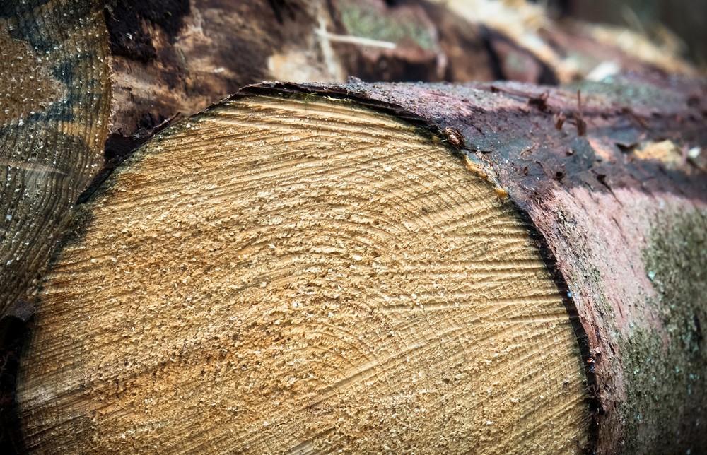 Игорь Руденя поставил задачи по развитию лесопромышленного комплекса Тверской области - новости Афанасий