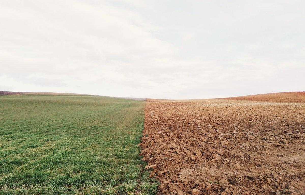В Ярославской области в ходе рейдового осмотра обследовано порядка 10 гектаров земель сельскохозяйственного назначения