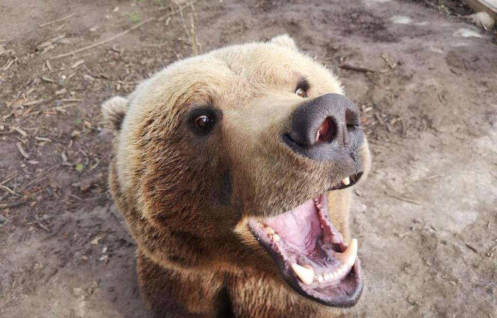 Авиамедведь Мансур из Тверской области стал звездой YouTube