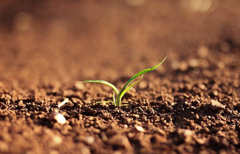 Россельхознадзор рассказал, какая почва позволит получить максимальный урожай - новости Афанасий
