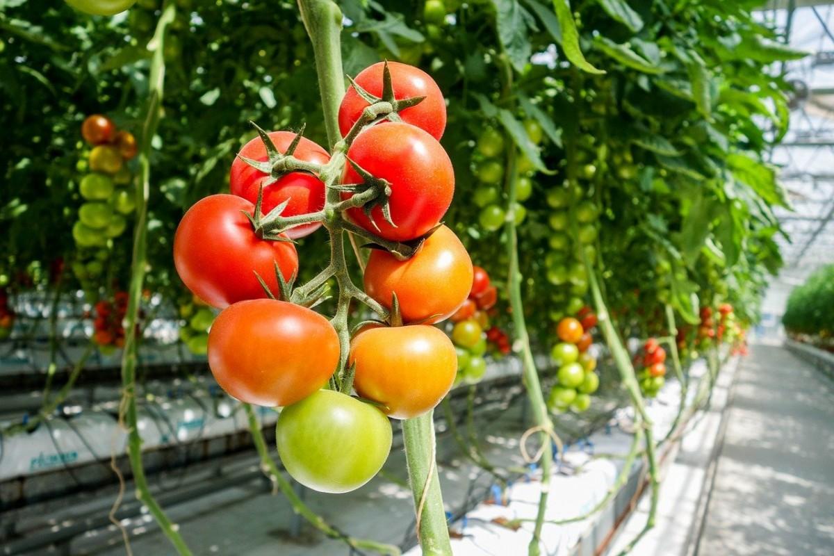 Чередование культур севооборота – эффективный способ повышения плодородия почвы