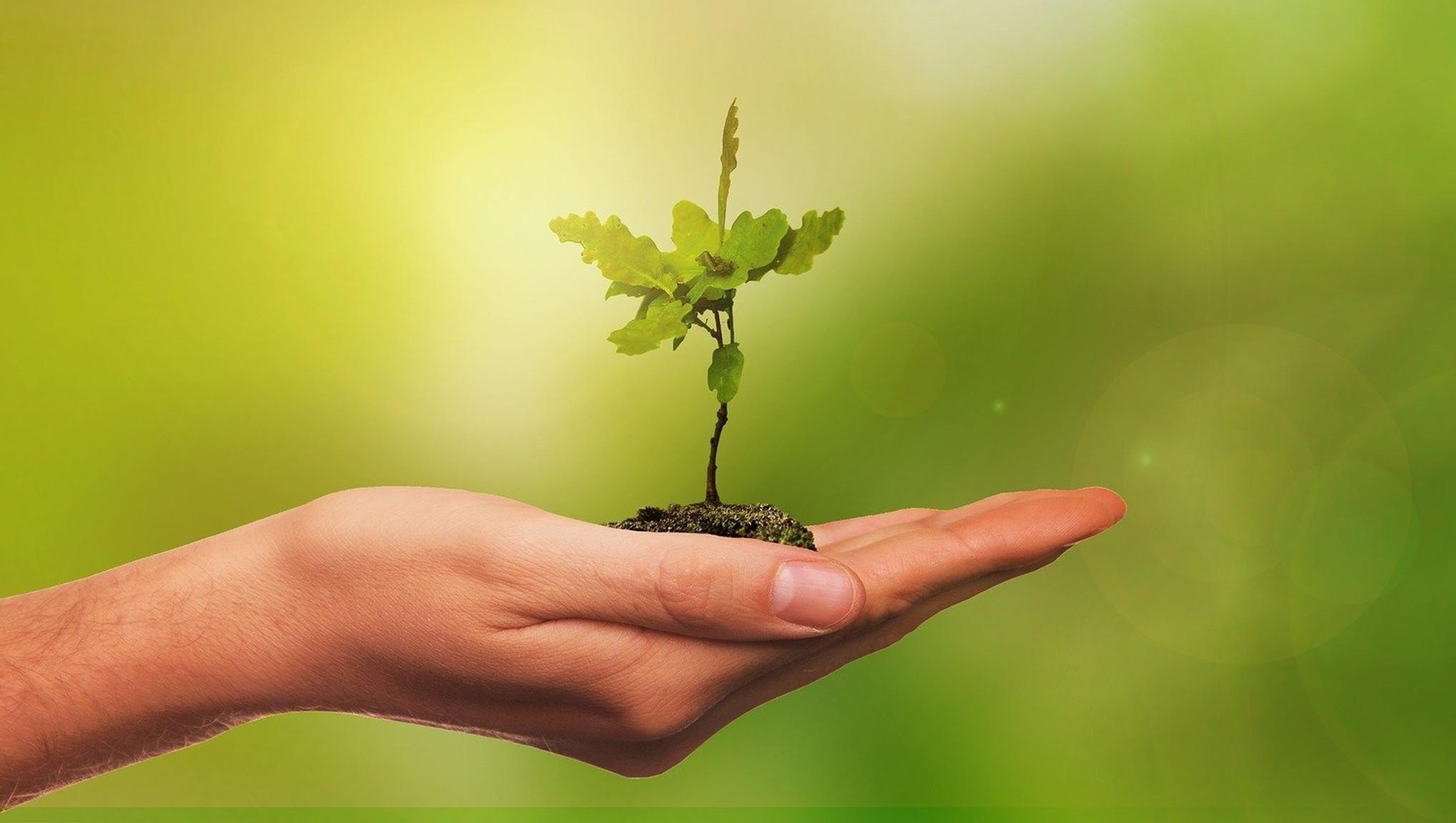 Жителям Тверской области предлагают посадить лес в честь Дня Победы