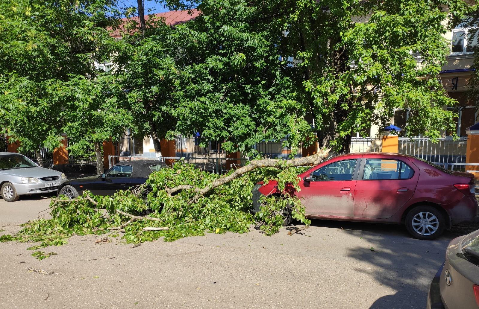 В Твери тяжелая ветка дерева рухнула на припаркованные машины - новости Афанасий
