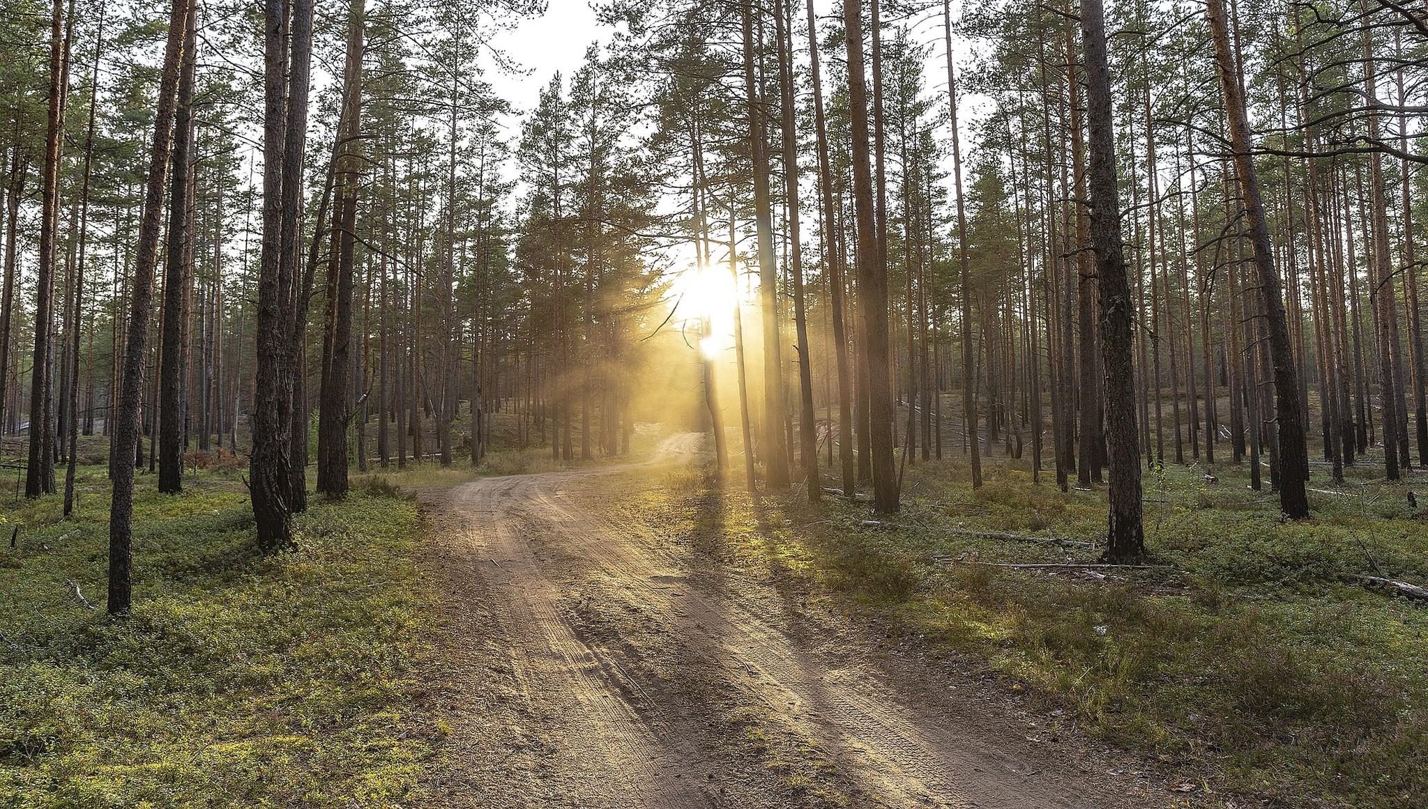 Еще в одном районе Тверской области запретили ходить и ездить в лес - новости Афанасий