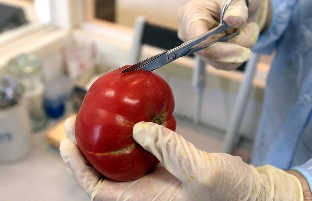 Россельхознадзор исследовал семена на наличие ГМО - новости Афанасий