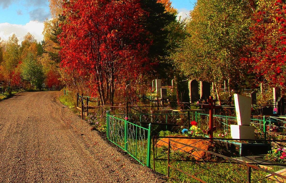 В Тверской области три деревенских кладбища оказались бесхозными