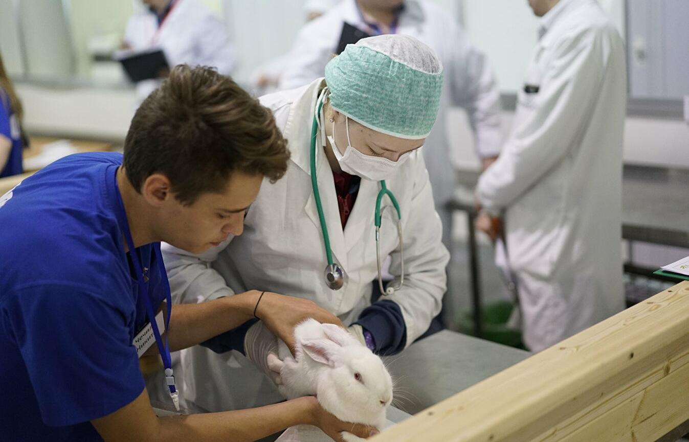 Утверждены Правила надлежащей аптечной практики лекарственных препаратов для ветеринарного применения - новости Афанасий