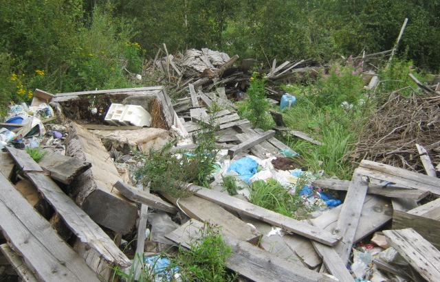 В Кувшиновском районе сельхозугодья продолжают зарастать деревьями и не устранены свалки отходов деревообработки - новости Афанасий