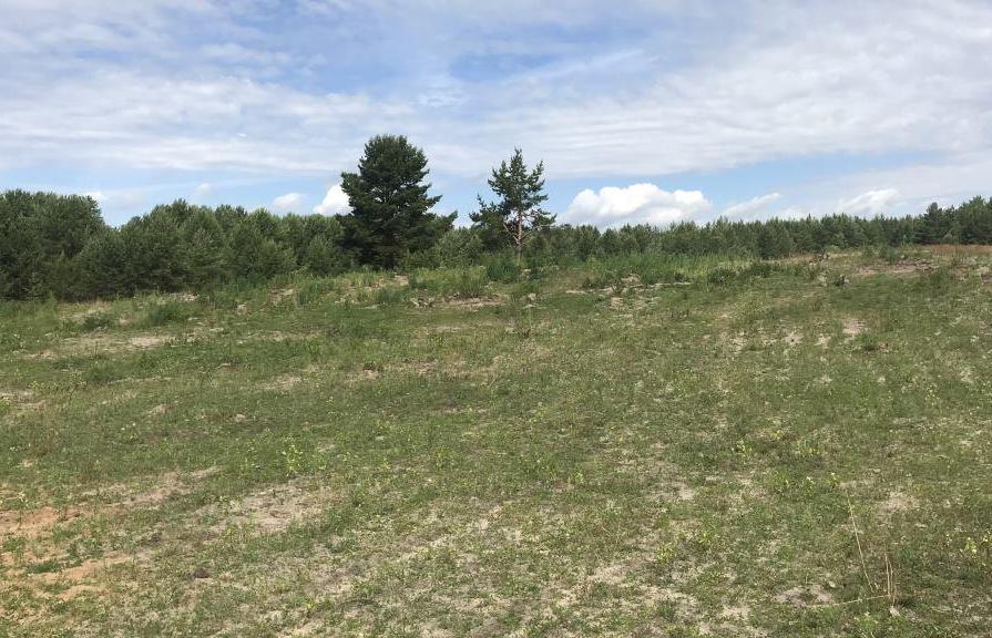 В Калининском районе вовлечено в оборот порядка 4 гектаров сельскохозяйственных угодий - новости Афанасий