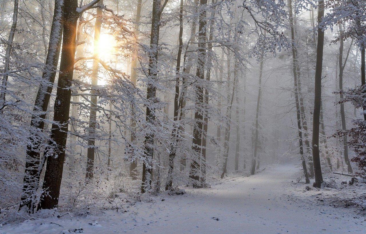 В Тверской области будут «охотиться» на браконьеров - новости Афанасий