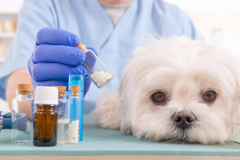 На ветеринарную аптеку подали в суд