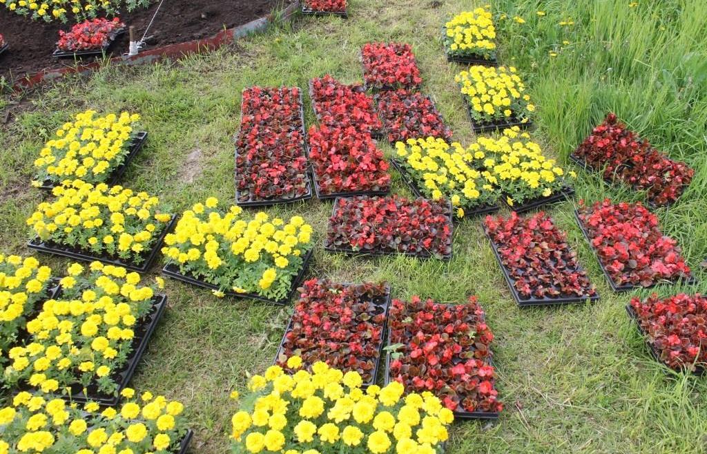 Герб Твери на набережной Степана Разина украсили сотни цветов - новости Афанасий