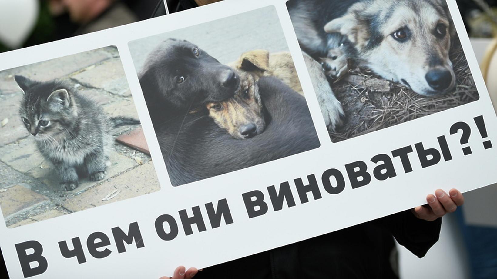 ВКонтакте против бездомных животных. В России массово блокируют сообщества зоозащитников