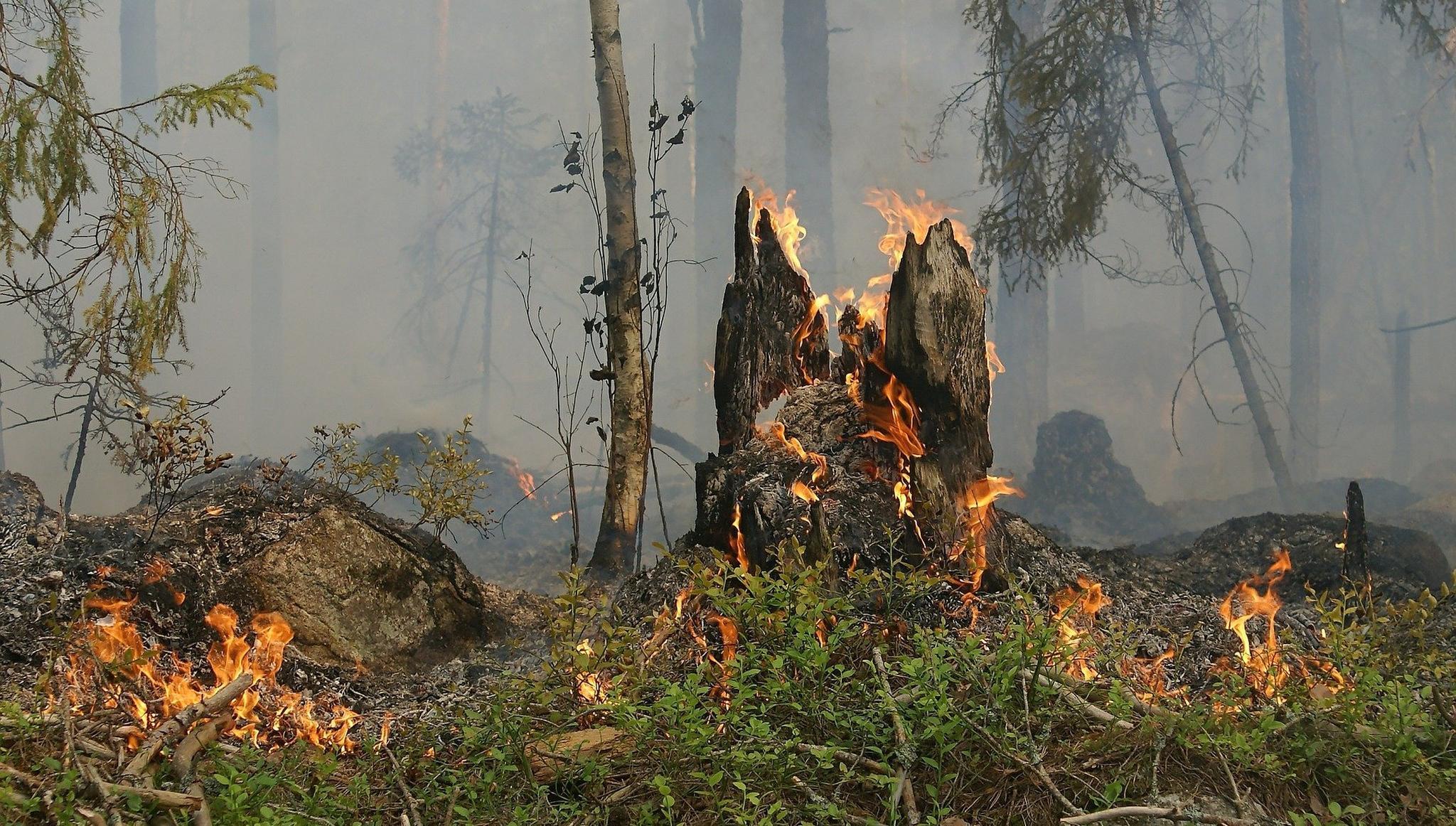 Жителей центральных районов Тверской области предупреждают о высокой пожарной опасности