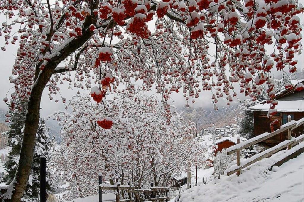 Как подготовить сад к зиме - новости Афанасий