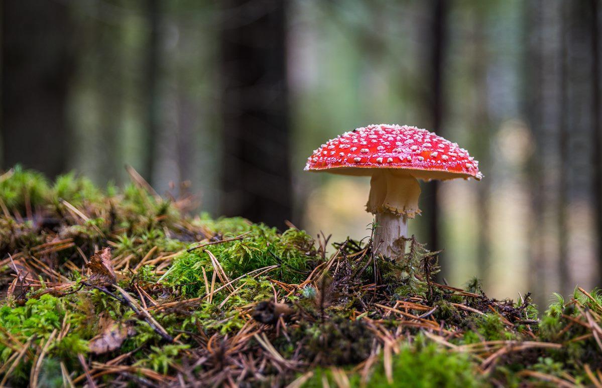 В России ужесточили правила сбора грибов и ягод - новости Афанасий
