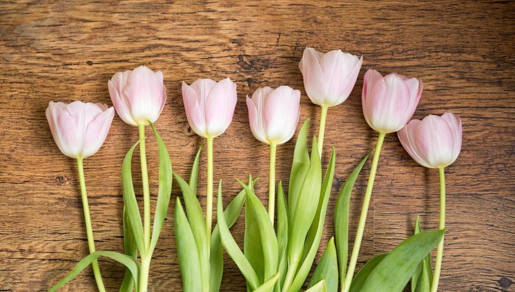 Афиша на 6-8 марта: прекрасные выходные для прекрасных дам - новости Афанасий