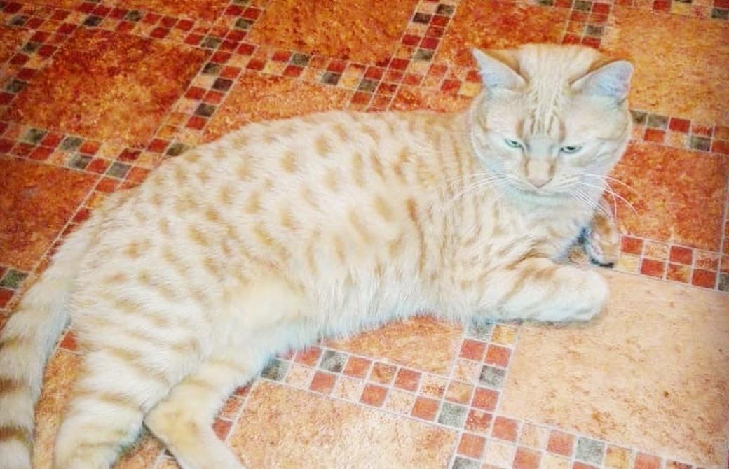 В Твери спасли сбитого на дороге кота / фото 18+ - новости Афанасий