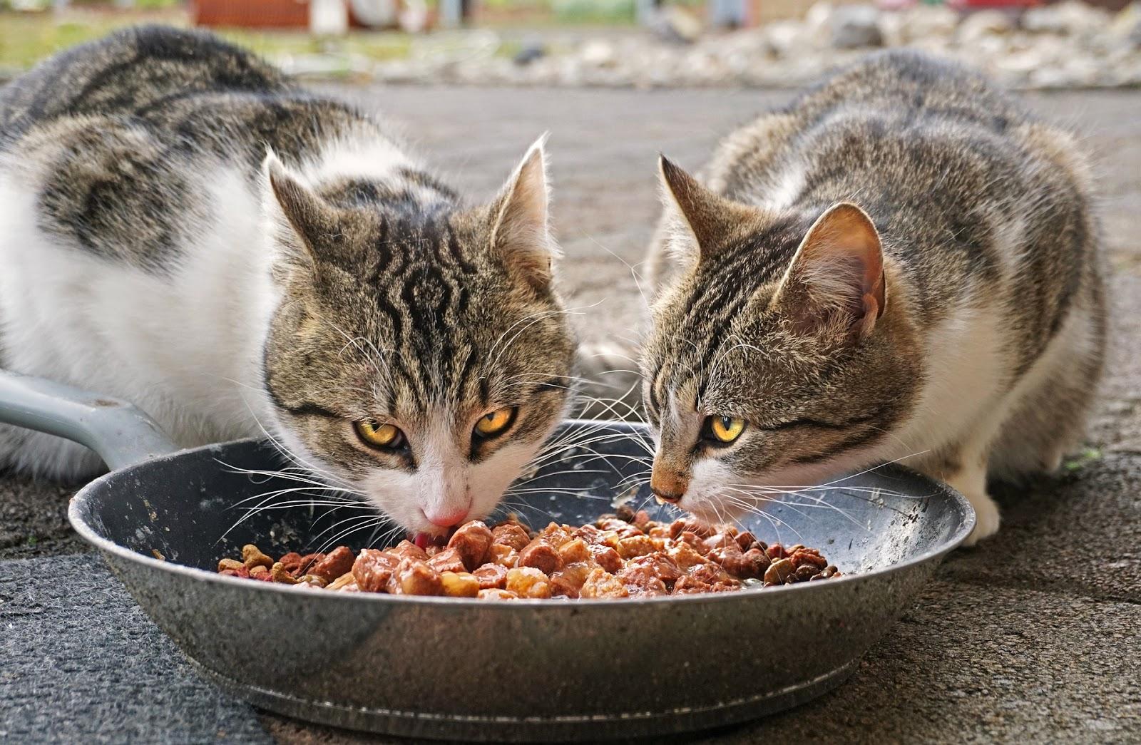 В Тверской области травят кошек
