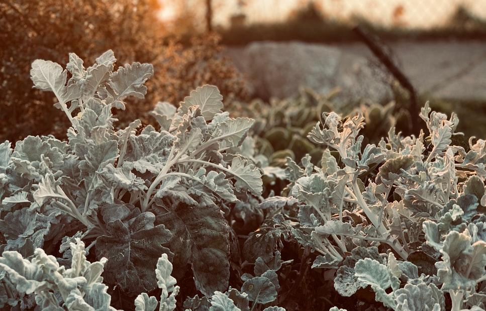 В Тверской области снова прогнозируют заморозки