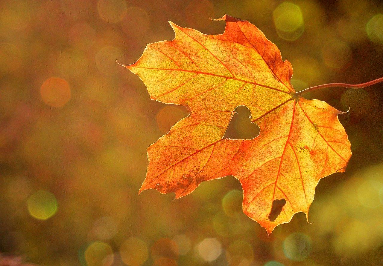 Последние выходные сентября в Твери: куда сходить, что посмотреть и послушать - новости Афанасий