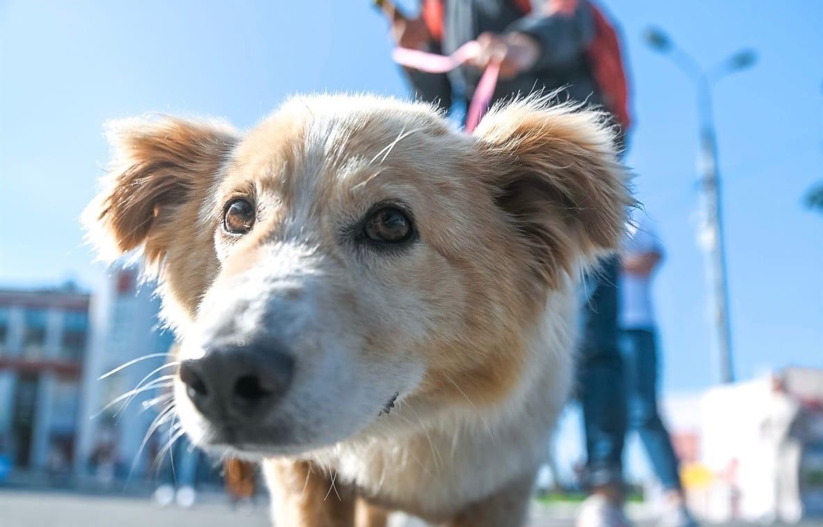 В Твери впервые пройдет благотворительный забег в пользу бездомных животных - новости Афанасий