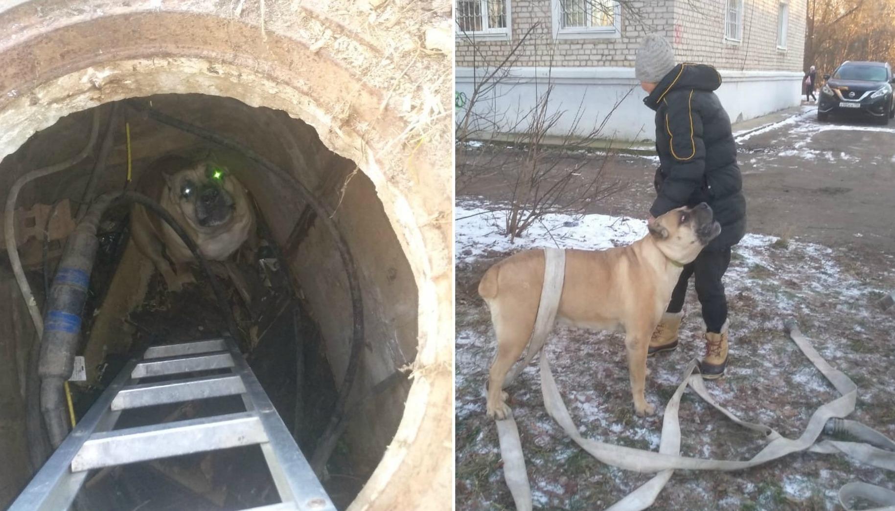 В Кимрах пожарные спасли собаку, провалившуюся в коллектор