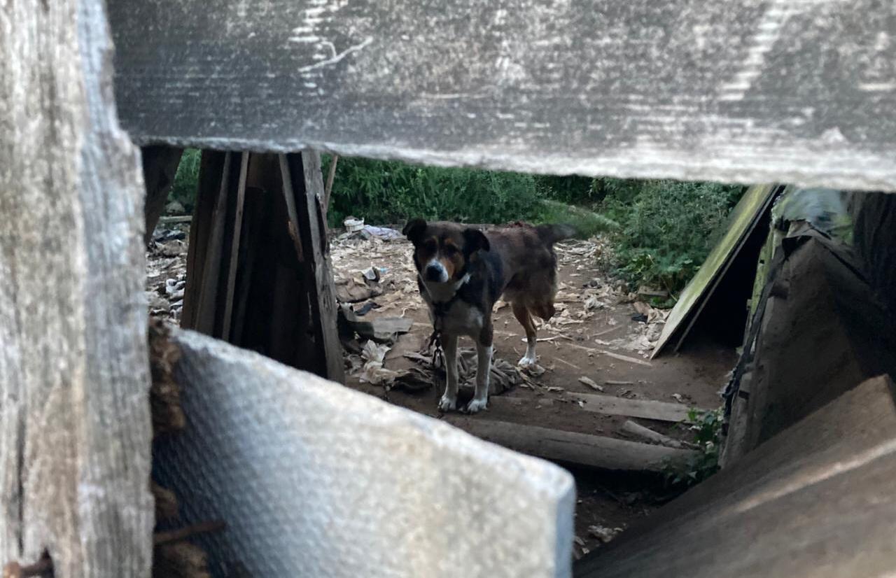 В Тверской области обнаружили очередной концлагерь для собак - новости Афанасий