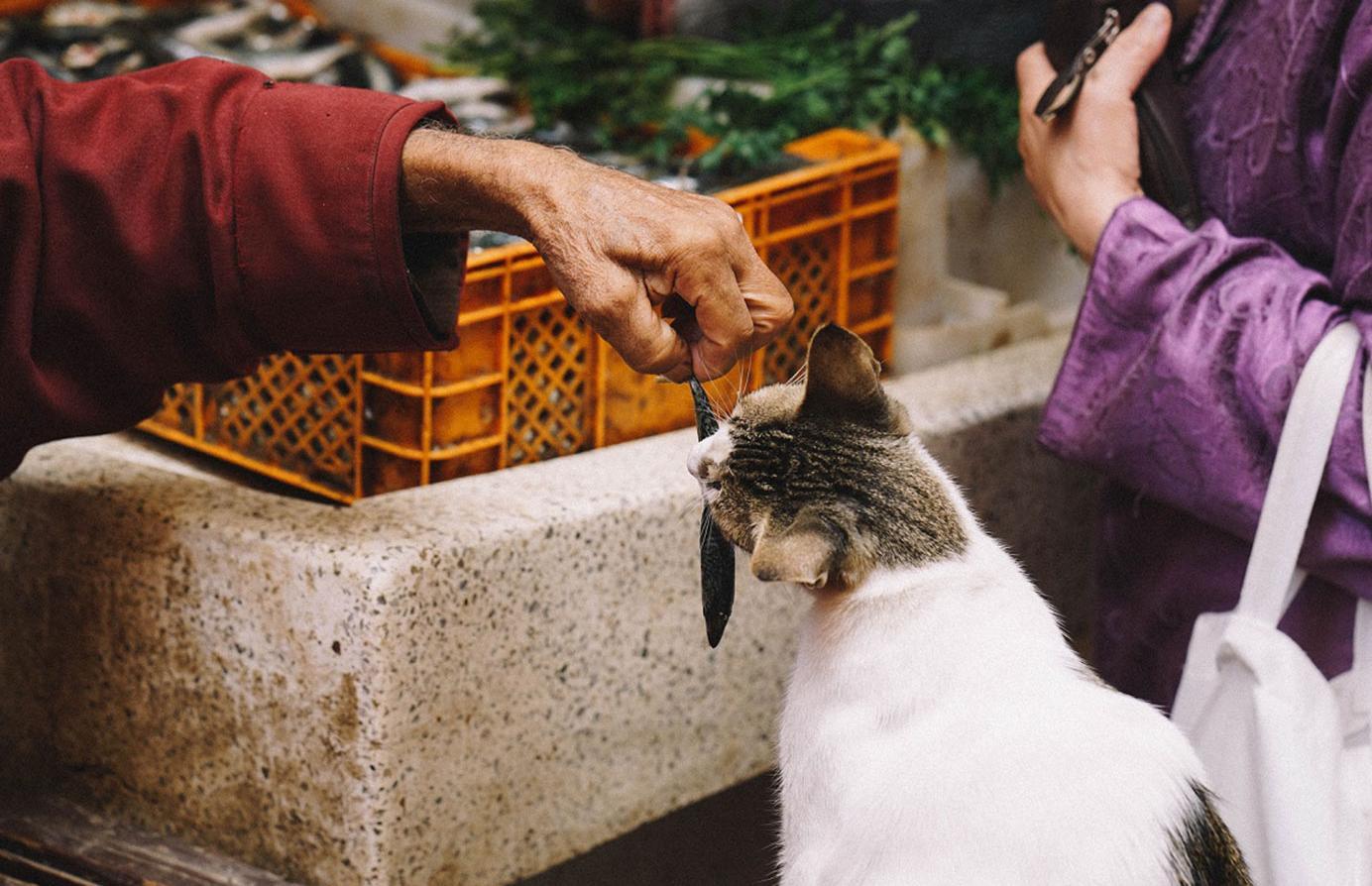 Тверские зоозащитники выиграли президентский грант на проект стерилизации животных