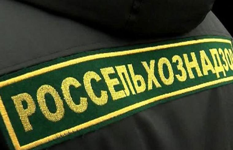 В Оленинском районе выявлены нарушения ветеринарного законодательства - новости Афанасий